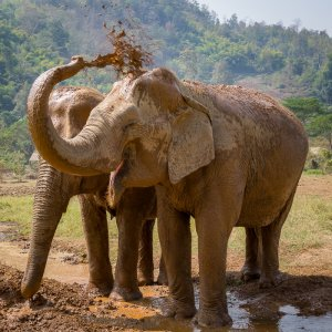 Elephant Nature Park Sanctuary - Chiang Mai, Thailand