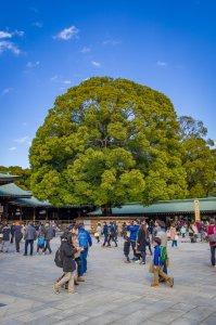 Wishing Tree at Meiji Jingu - Shibuya, Japan